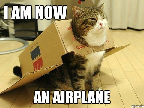 Tgif Cat Meme 45585 Trendnet